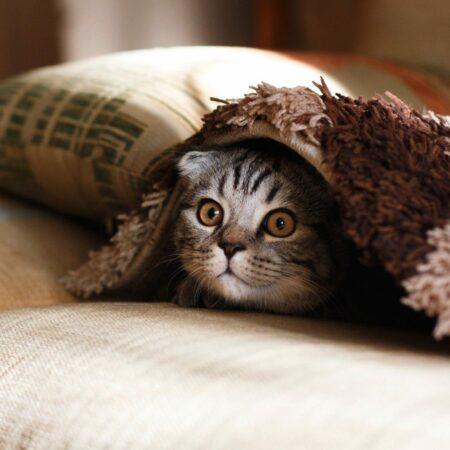 Sofa vs Katze: So werden Möbel nicht zum Kratzbaum