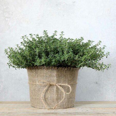 Wie Pflanzen die Wohnatmosphäre beeinflussen