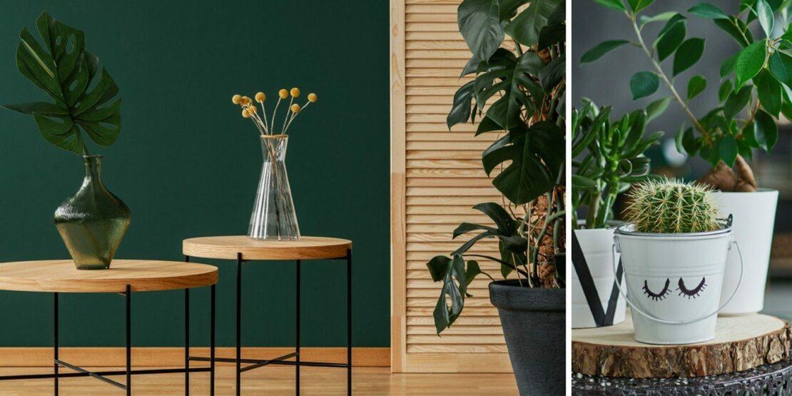 Beispiele für verschiedene Zimmerpflanzen, Töpfe und Vasen