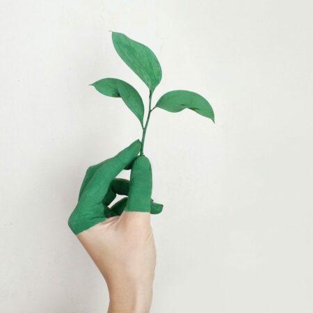 Gütesiegel für nachhaltige Möbel erklärt: Darauf sollten Sie achten